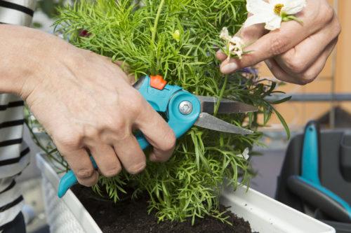 Gardena - Sécateur à herbe et à fleurs